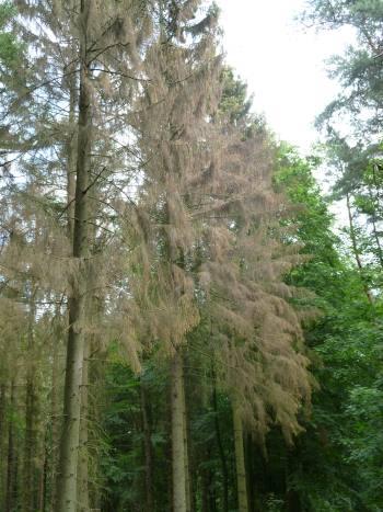 abstebender, brauner Baum