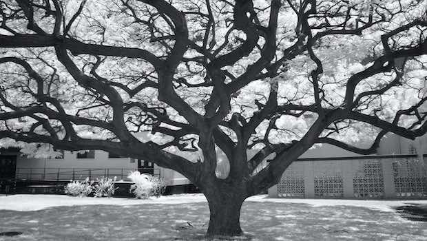 Baum Äste verzweigt Hintergrund Haus schwarz weiß