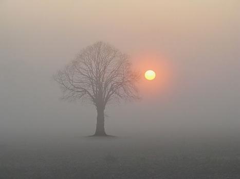 Baum mit Sonne in trübem Licht