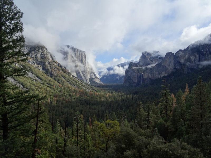 Berge und Wald im Nationalpark in Kalifornien, USA