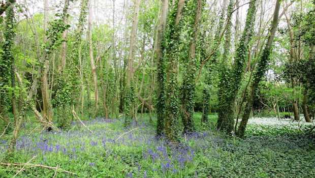 Feuchtbiotop Wald