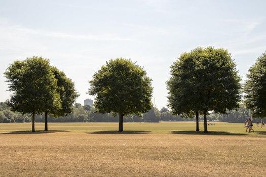 braunes Gras unter Bäumen