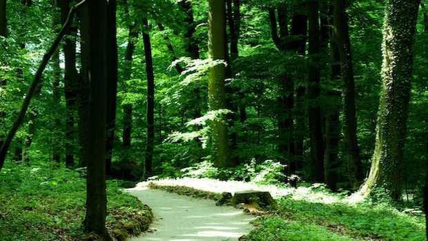 Waldweg verschlungen