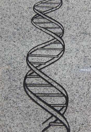 DNA-Strang auf Steinboden