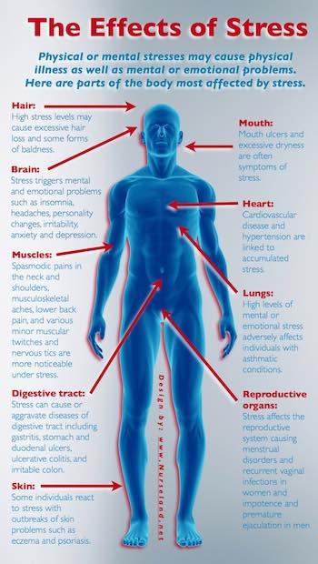 Schaubild. Stress und Auswirkungen.