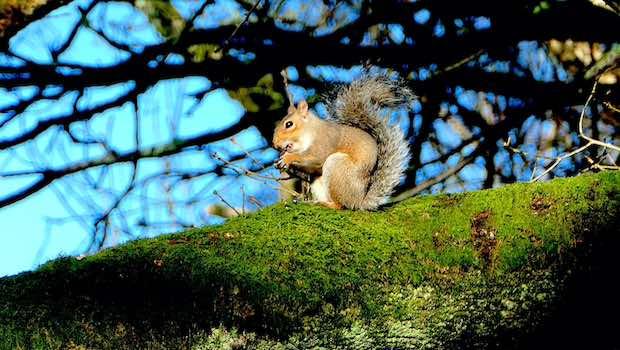 Eichhörnchen auf Baum in der Sonne Moos