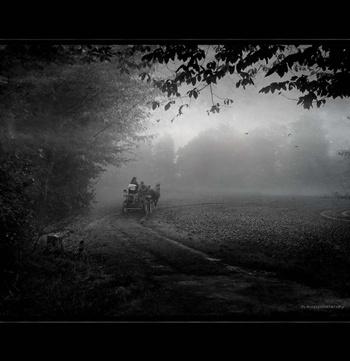 Kutsche im Nebel