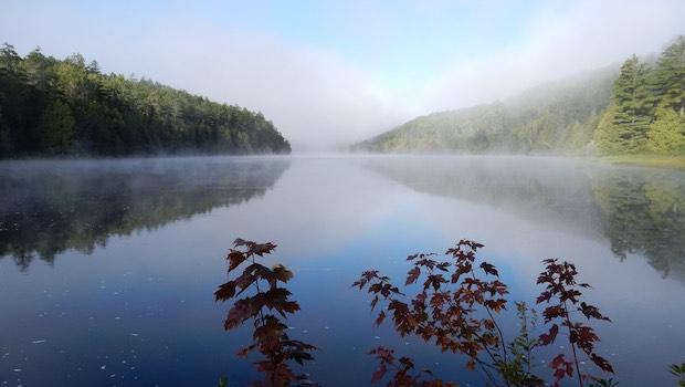 gerade zulaufender Fluss, Blätter im Vordergrund