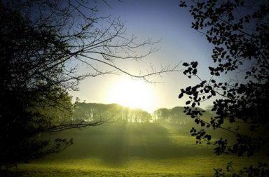 Frühlingssonne über Wald und Wiese