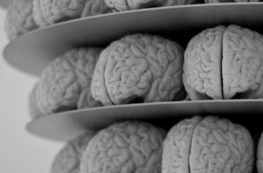 Gehirne gestapelt, schwarzweiß