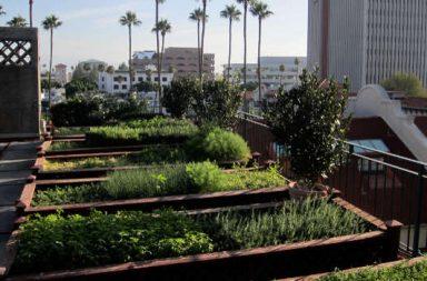 Gemüseanbau Dach