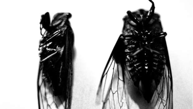 tote Insekten