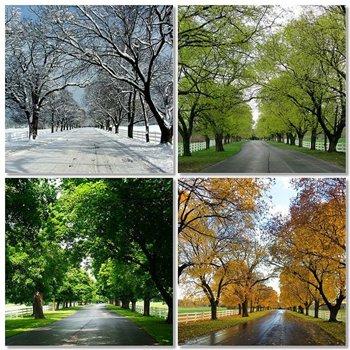 Allee im Wechsel der Jahreszeiten