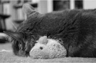 Katze mit Plüschmaus