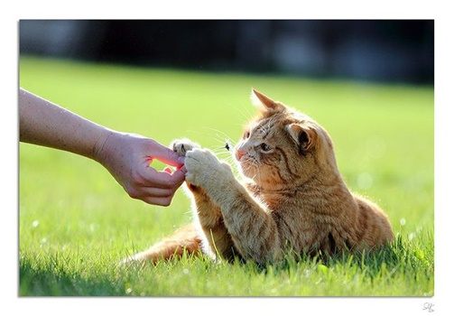 Katze, Hand und Blume