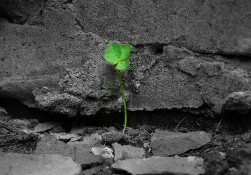 Grüner Klee wächst auf Schutt und Asche