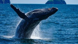 Meer Wal
