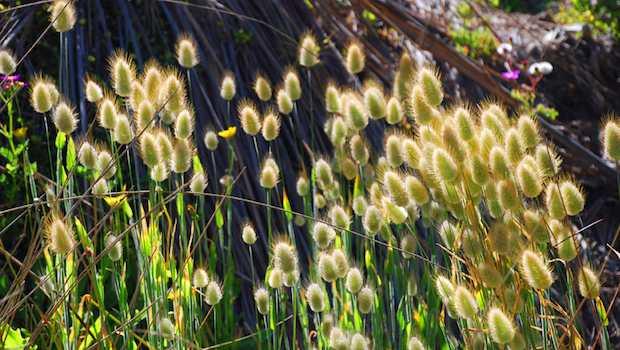 Pflanzen im Sonnenlicht