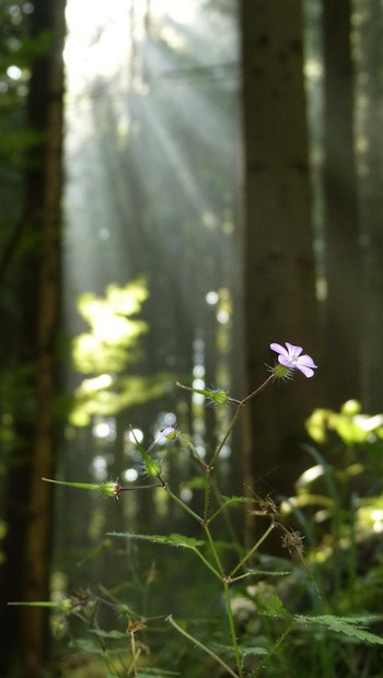 Sich als Teil der Natur zu betrachten, kann die Angst vorm Sterben mindern