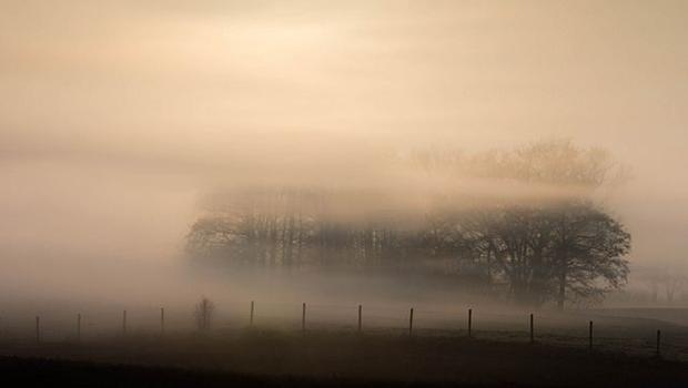 Baumgruppe im Nebel