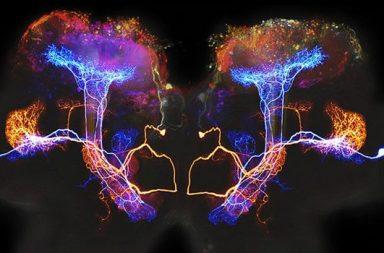 Nervenzellen des Geruchs