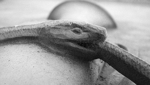 Schlange, die sich in den Schwanz beißt, schwarzweiß