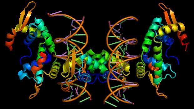 graphische Darstellung eines Proteins