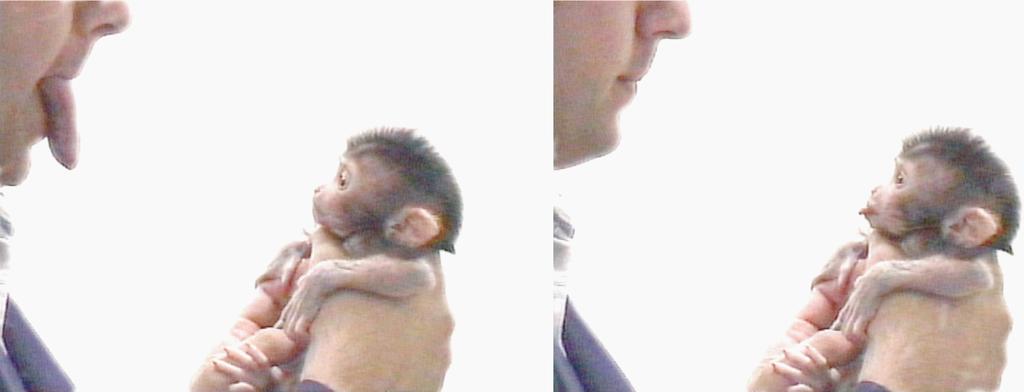 Affenjunges in Menschenhänden