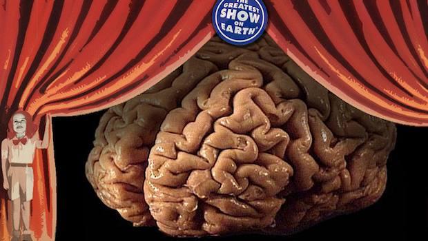 Vorhang auf für das Gehirn