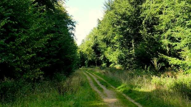 Waldweg dichter Wald