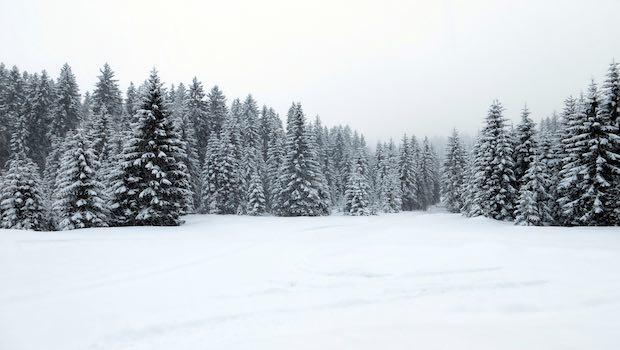 Winterwald Tannenbäume Schnee