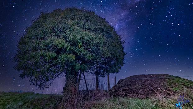 Zeichnung mit Baum nachts Wiese